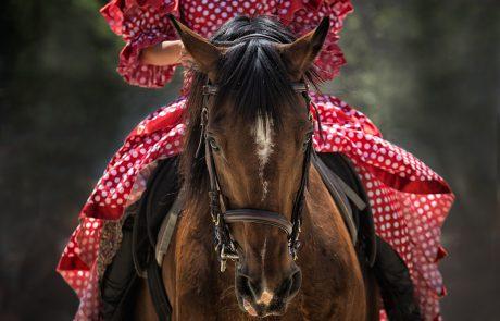 סוס ורוכבו