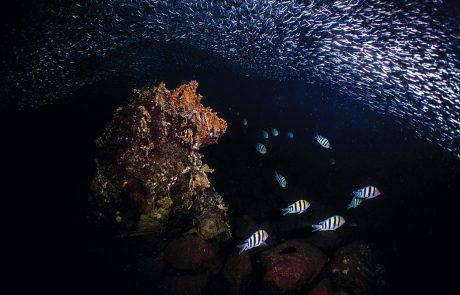 מה רבו מעשיו: תצפית נדירה במי מפרץ אילת